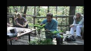 >> Amores Insólitos 60 – Captar a musicalidade das plantas – As plantas cantantes de Damanhur
