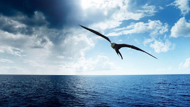 "PoeMário vasculhado 9 – ""L'Albatros"" de Charles Baudelaire"